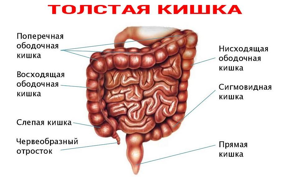 026 2 - Что делать при диарее или, когда настигла медвежья болезнь, рассказывает доктор Маматов